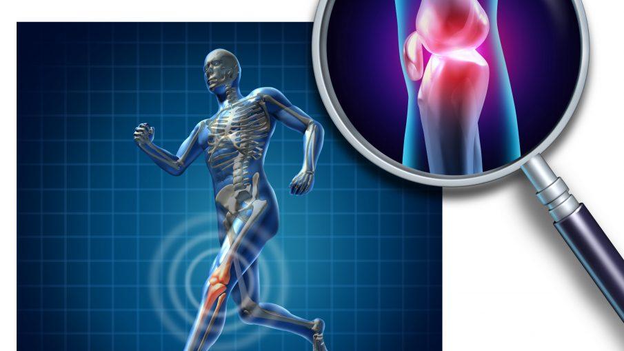 Knee-cartilage-1